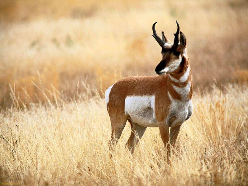 learn impala